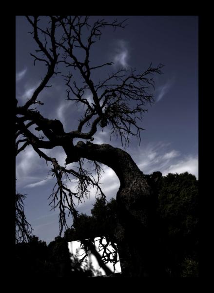 L'ombra del paisatge