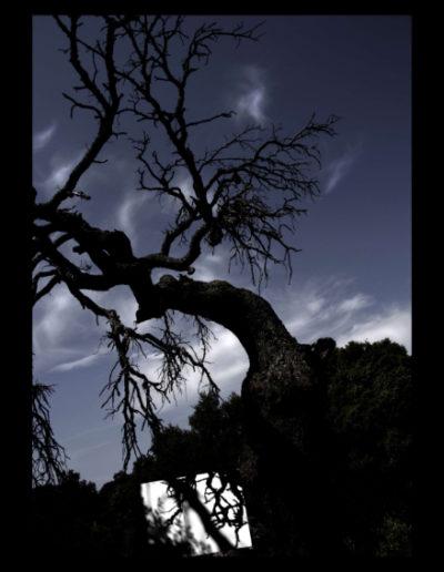 Ombra D'alzina, 2006<br/>Fotografía color. Impresión Giclèe / Colour Photograph. Digital Print