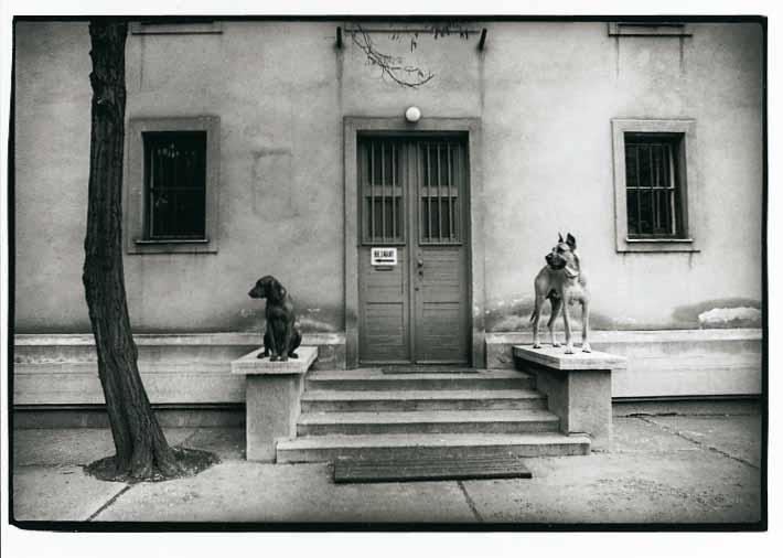 Guard dogs, 1976<br/>Gelatina de plata / Silver gelatin