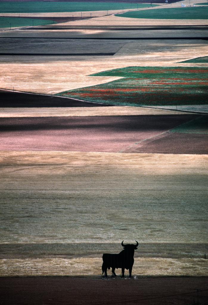 Tierra de Campos, 1987<br/>Tintas pigmentadas / Inkjet print