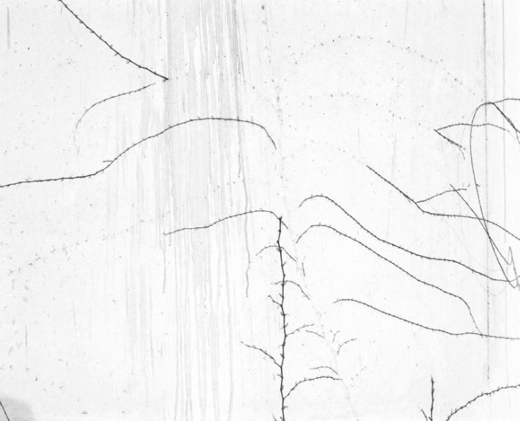 White #12, 2000<br/>Fotografía color. Papel Cibachrome laminado sobre aluminio