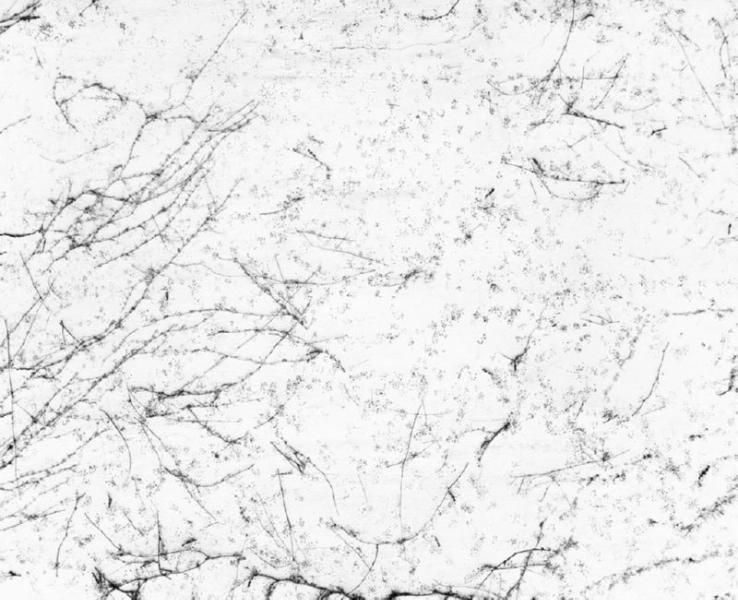 White, 2000<br/>Fotografía color. Papel Cibachrome laminado sobre aluminio