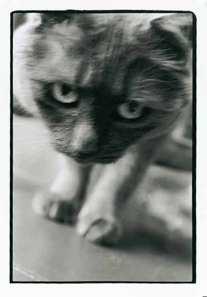 Parisian cat, 1996<br/>Gelatina de plata / Silver gelatin