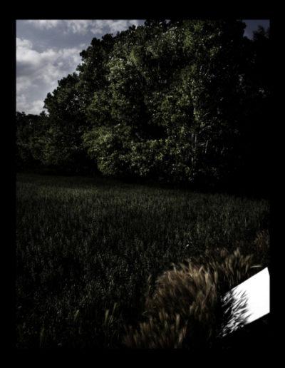 L'ombra Dels Grans D'or, 2006<br/>Fotografía color. Impresión Giclèe / Colour Photograph. Digital Print