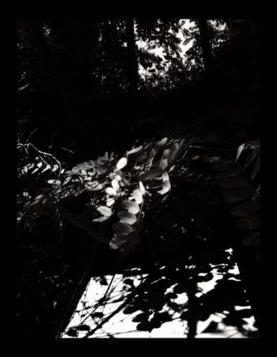Serie L'ombra Del Paisatge<br/>Fotografía color. Impresión Giclèe / Colour Photograph. Digital Print