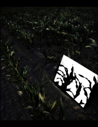 Ombra De Milloc, 2006<br/>Fotografía color. Impresión Giclèe / Colour Photograph. Digital Print