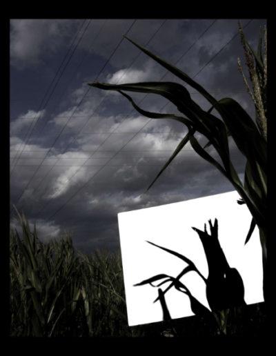 Com L'ombra Que Axeica El Vol, 2006<br/>Fotografía color. Impresión Giclèe / Colour Photograph. Digital Print