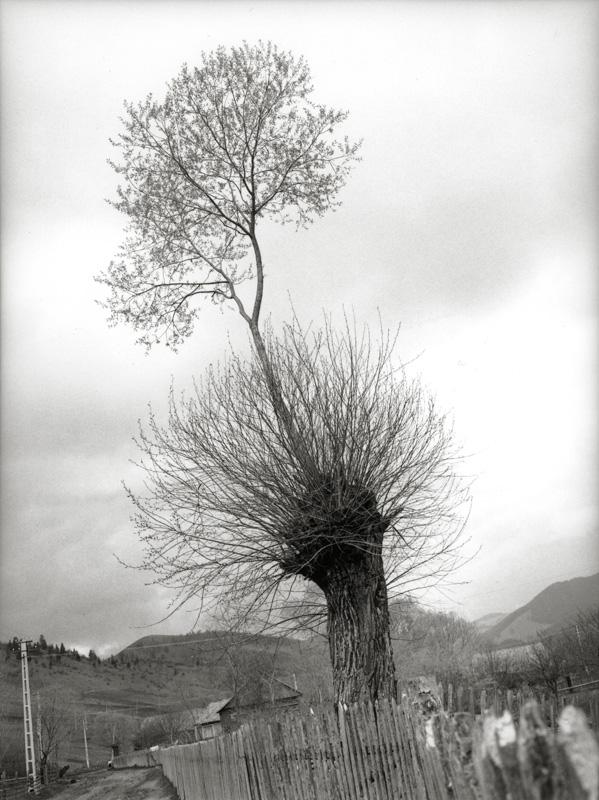 Tree Parasite<br/>Gelatina de plata / Silver gelatin