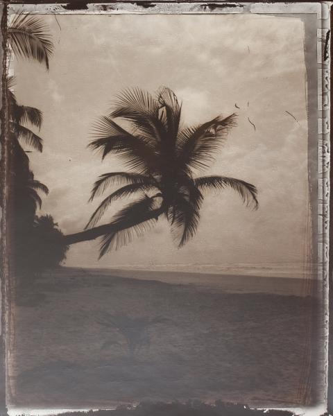 Assinie, palmier. C.I. 1999<br/>Impresión de tintas de pigmentos / Inkjet