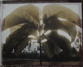 Bali, 2003<br/>Impresión de tintas de pigmentos / Inkjet