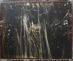 Bali. Banian, 2004<br/>Impresión de tintas de pigmentos / Inkjet