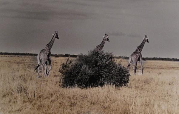 Botswana, 2009<br/>