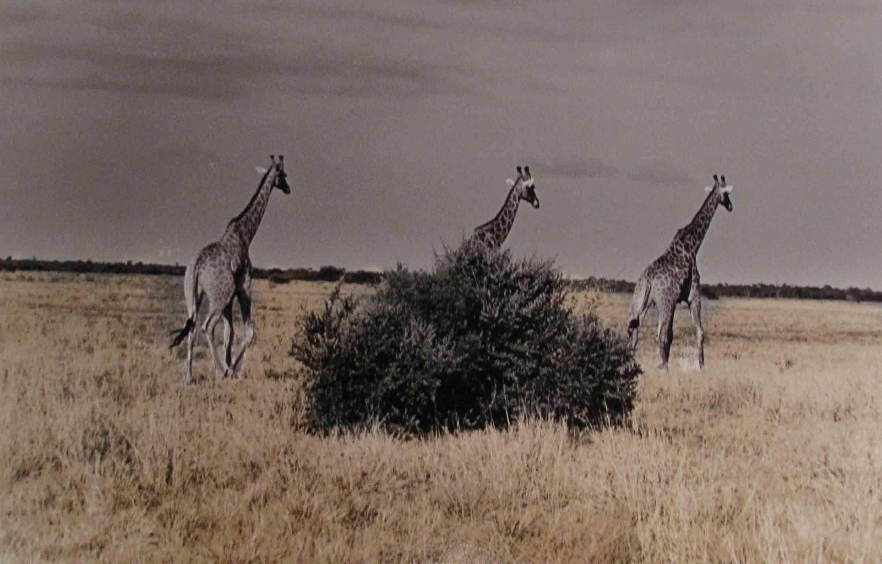 Botswana, 2009<br/>Impresión de tintas de pigmentos / Inkjet
