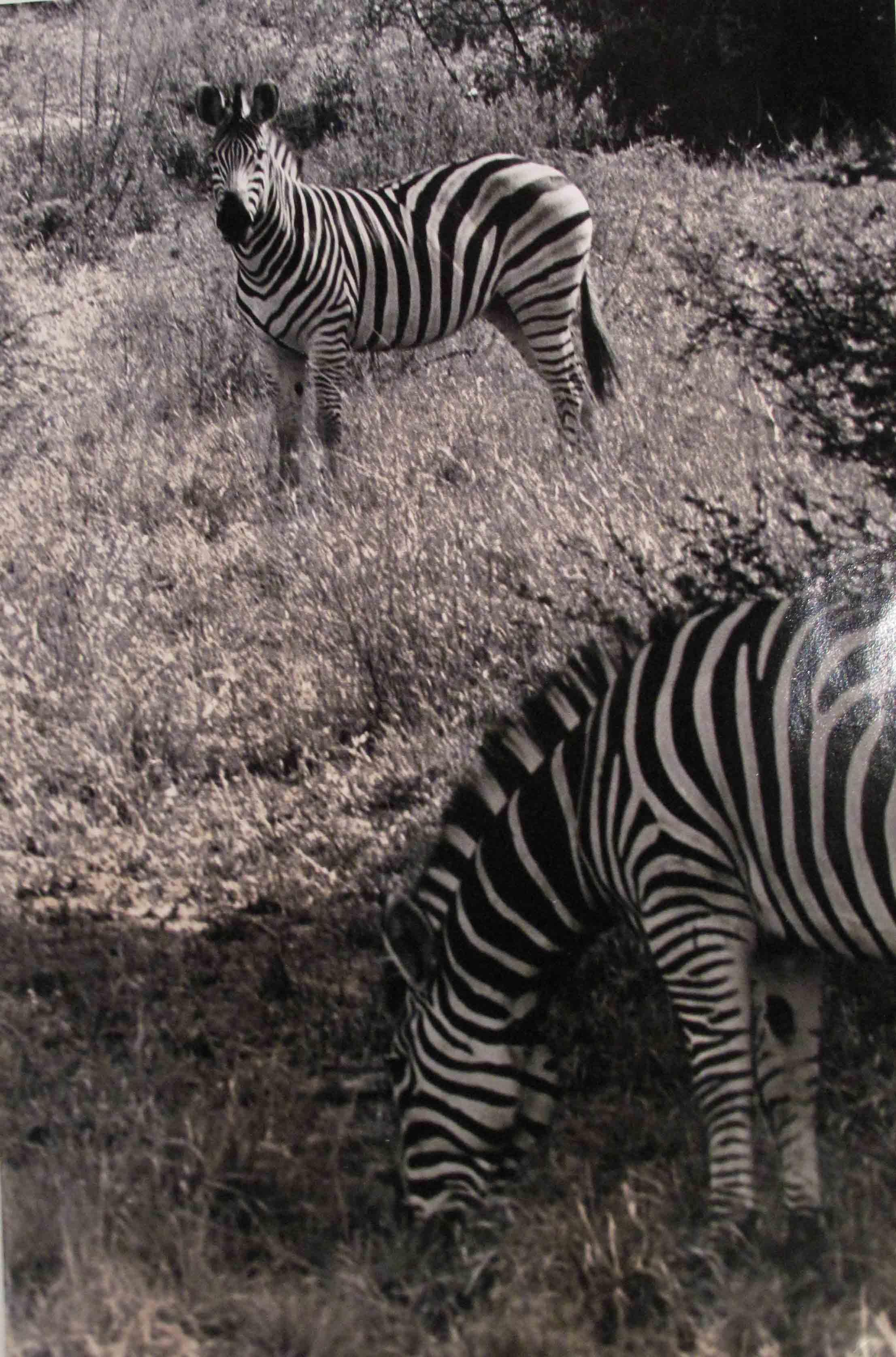 Botswana, Chute Victoria, 2009<br/>Impresión de tintas de pigmentos / Inkjet
