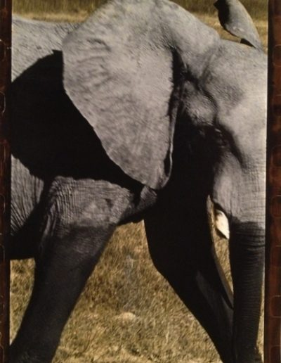 Botswana, Elephant, 2009<br/>Impresión de tintas de pigmentos / Inkjet