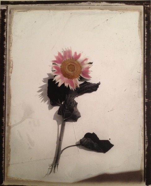 Francia, Tournesol. Hommage a Van Gogh, 2004<br/>Impresión de tintas de pigmentos / Inkjet