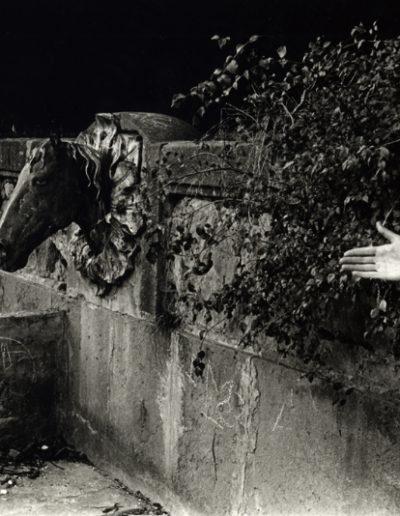 La mirada del cavall, 1978<br/>Giclée