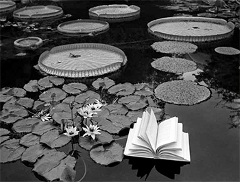 Lecciones de botánica, Suiza, 1997<br/>Gelatina de plata / Silver gelatin
