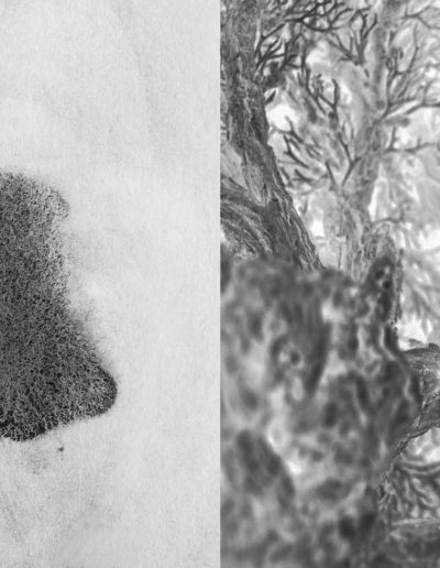 Rizoma<br/>Fotografía digital y dibujo en tinta china sobre papel Hanehmüle German Etching / Digital Photograph and chinese ink drawing on Hanehmüle German Etching Paper