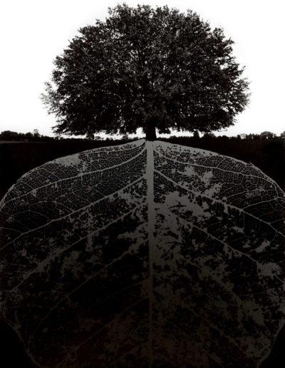 Untitled, 1964<br/>Gelatina de plata / Silver gelatin print