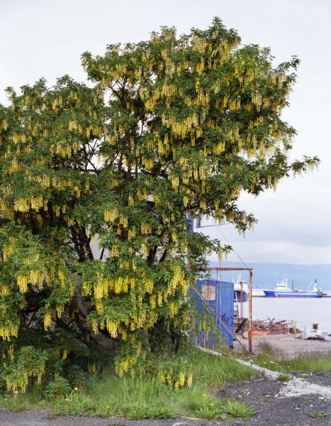Yellow rain, 2006<br/>Impresión digital