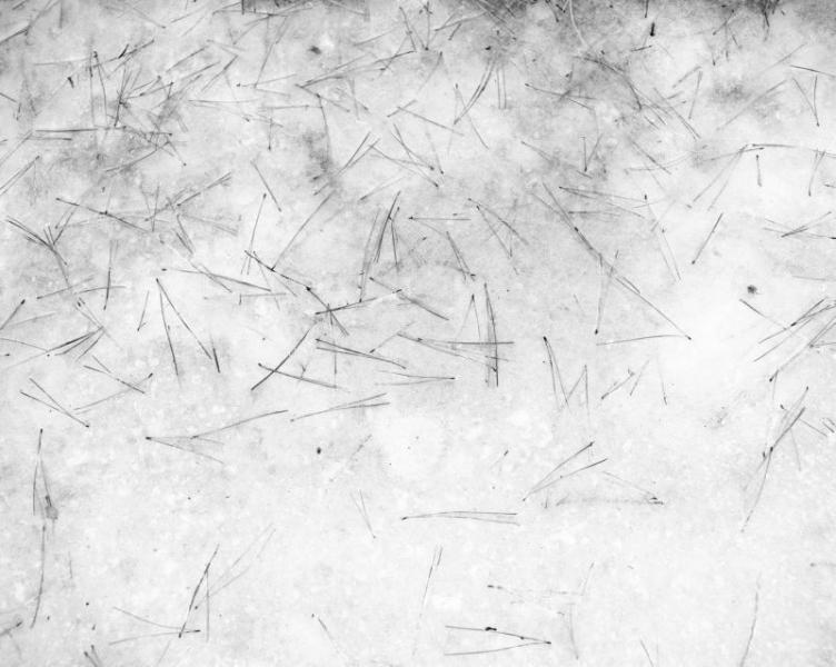 White #2, 2000<br/>Fotografía color. Papel Cibachrome laminado sobre aluminio