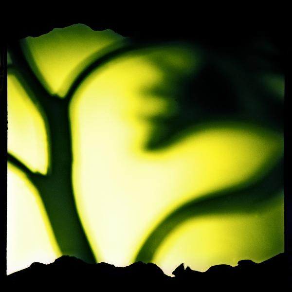 Serie L'arbre, 1993<br/>Fotografía color / Colour Photograph.