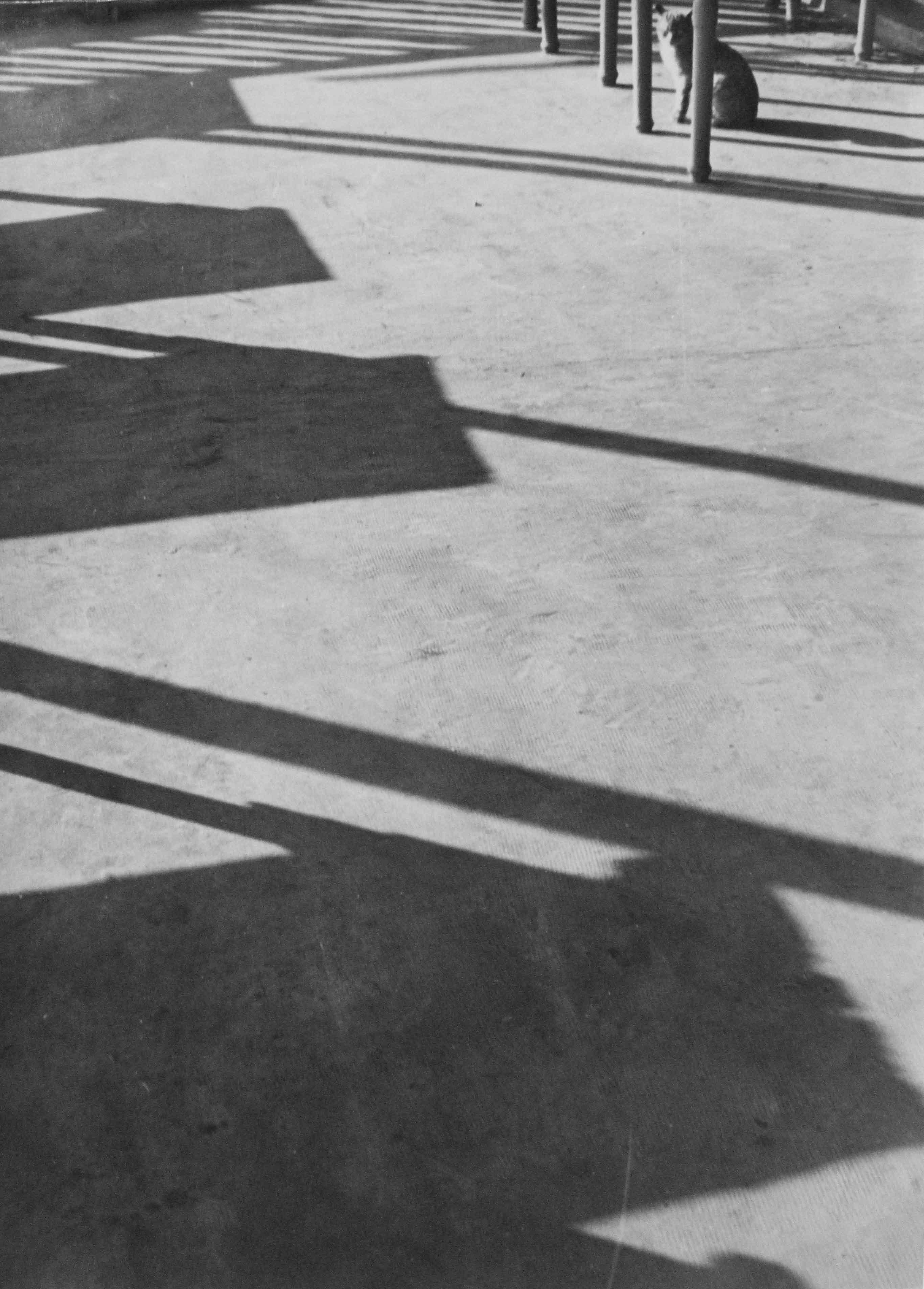 Terrassa, 1953<br/>Gelatina de plata / Silver gelatin