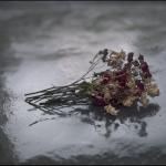 Rosas secas, 2011<br/>Impresión de tintas de pigmentos / Inkjet print