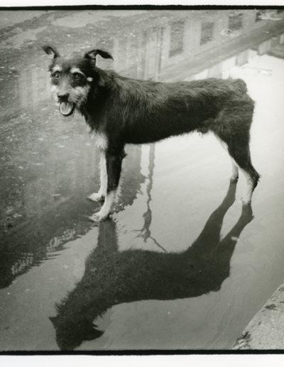 Ser perro en La Habana<br/>