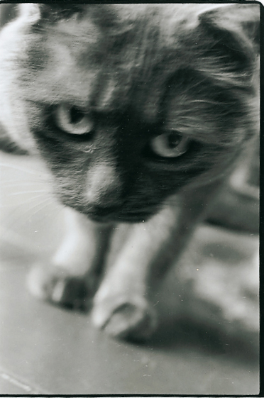Parisian cat, 1996<br/>