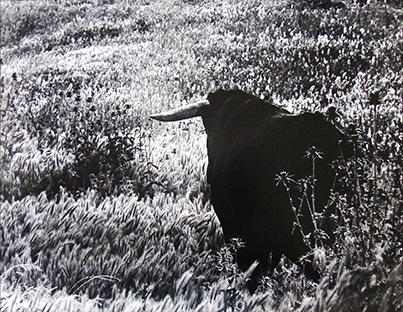 Colita. Campo Andaluz, El Toro, Jerez de la Frontera. 1969<br/>