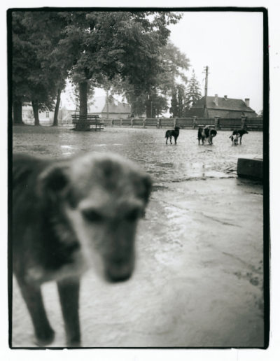 The hermit's dog, 1993<br/>