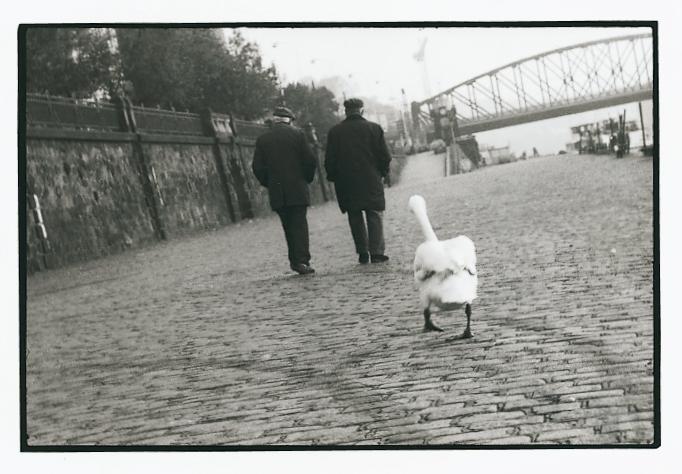 Swan's way, 1991<br/>