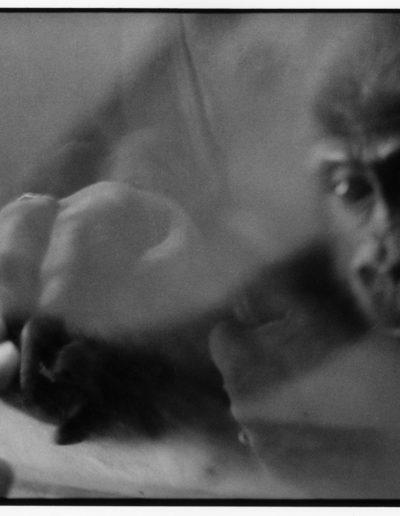 The creation of Adam. Sydney Zoo, 1997<br/>