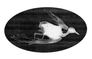 A pidgeon ellis island, 2008<br/>