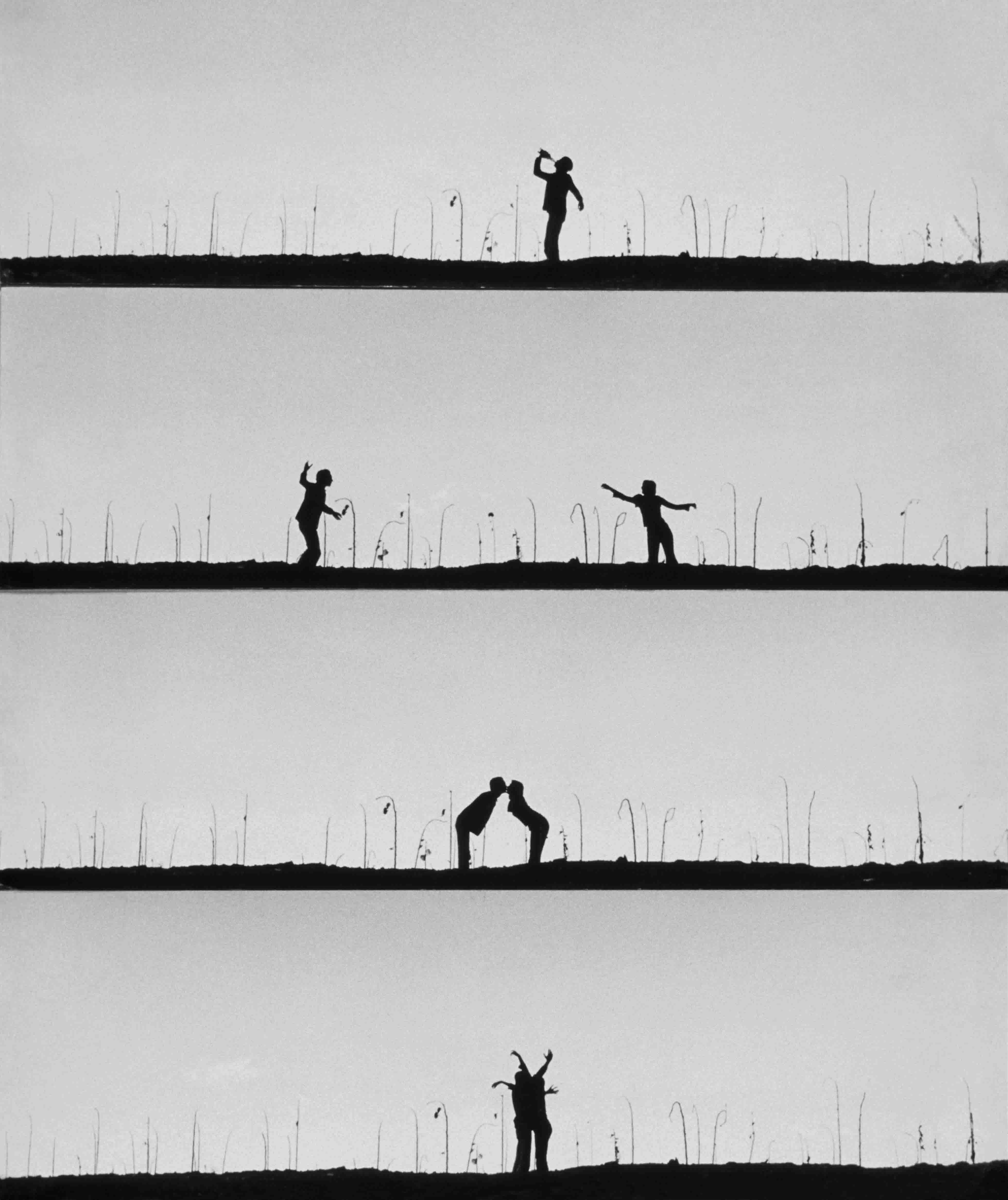 Campo de Girasoles. 1975<br/>