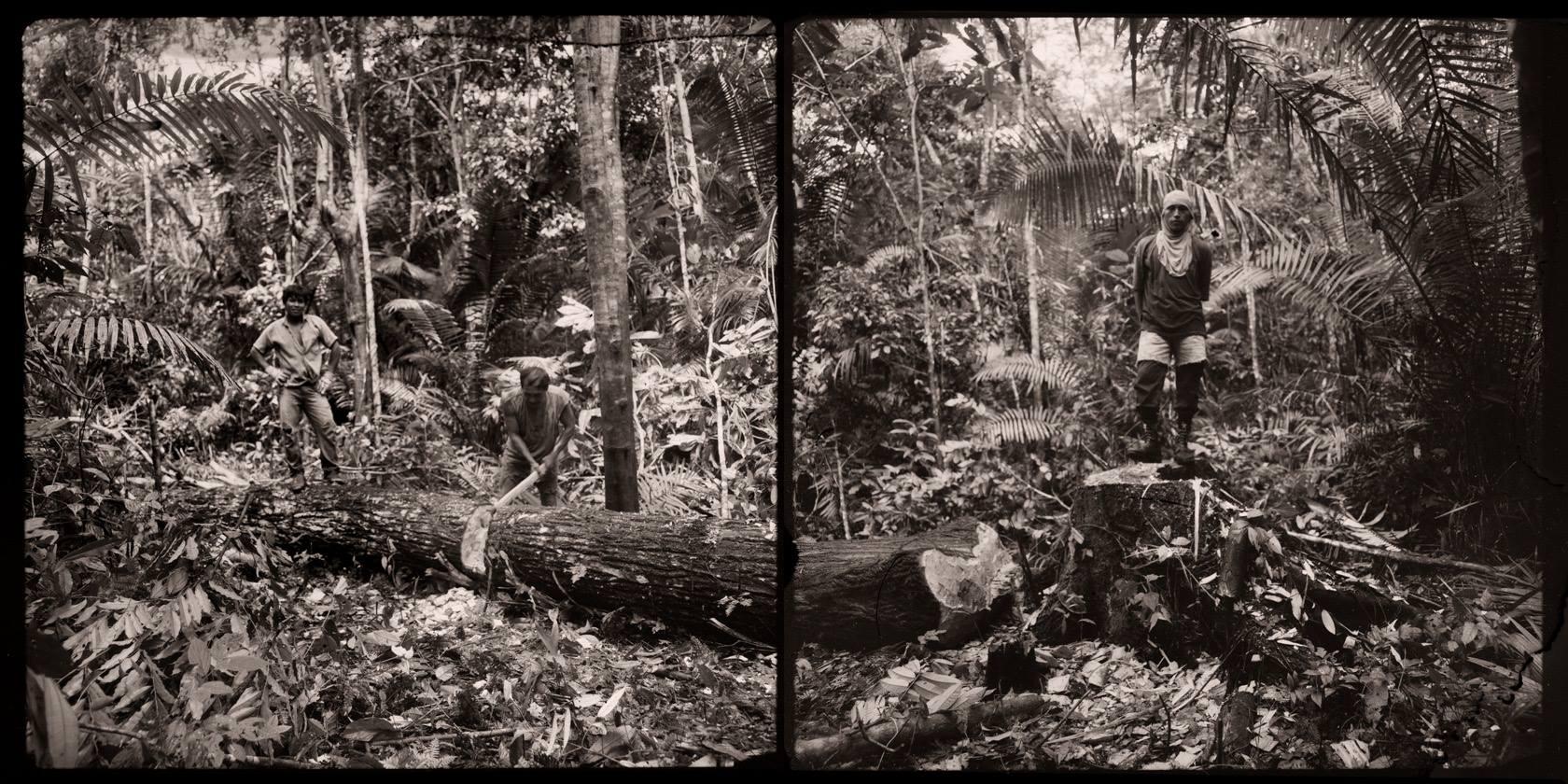 Selva de Iquitos, 1994<br/>Virado de oro / Golden Toner