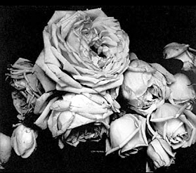 Steichen, Edward. Heavy Roses, 1914. Photogravure<br/>