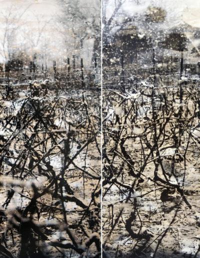 Viñas de invierno I y II, 2006-2005<br/>