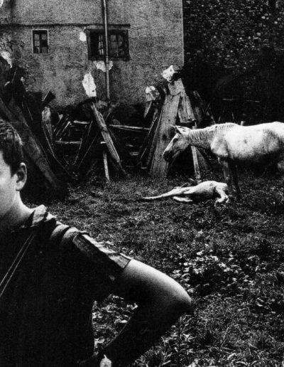 Gabriel Cualladó. Gabriel con potranco, 1963<br/>Gelatina de plata