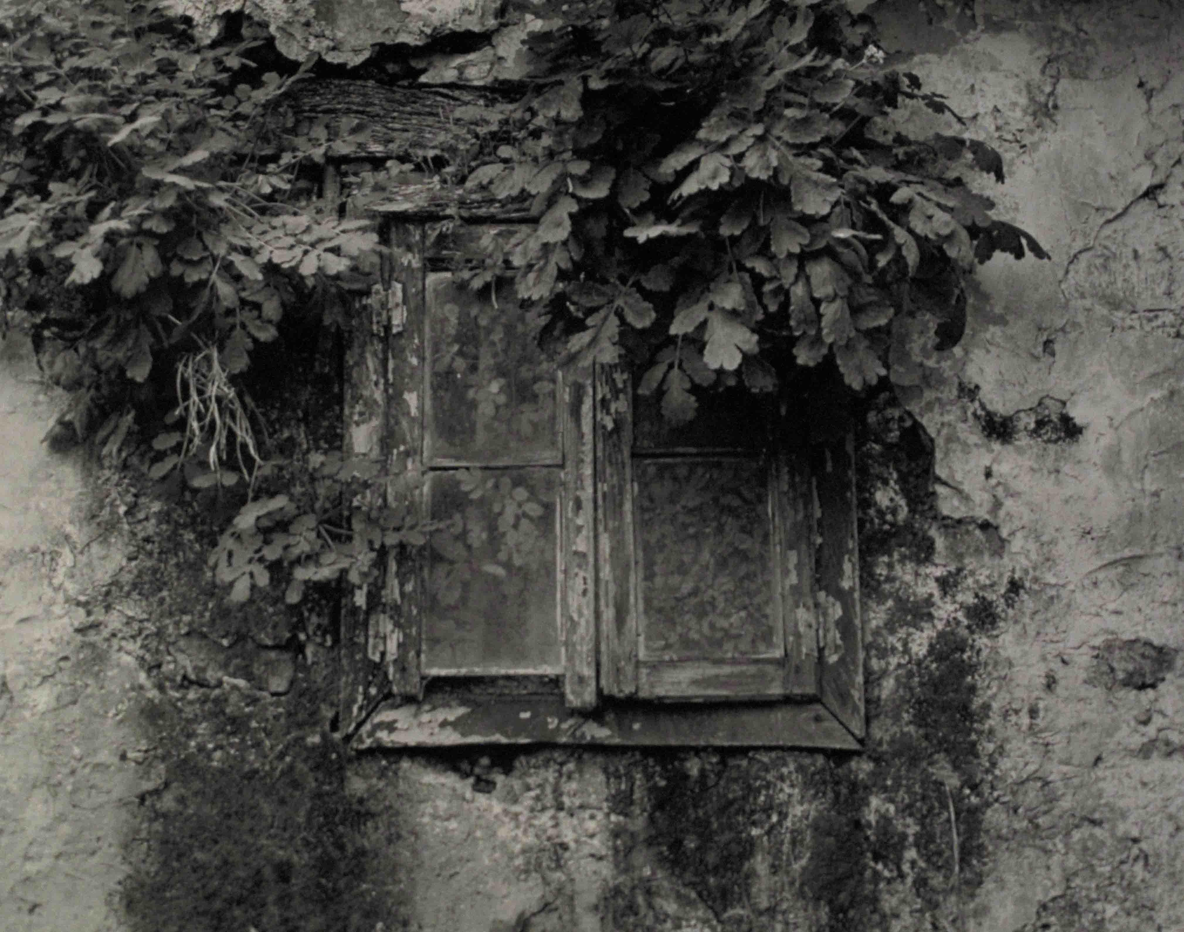 Ma Casanova.  Jardin interior, 2008<br/>Gelatina de plata / Silver gelatin