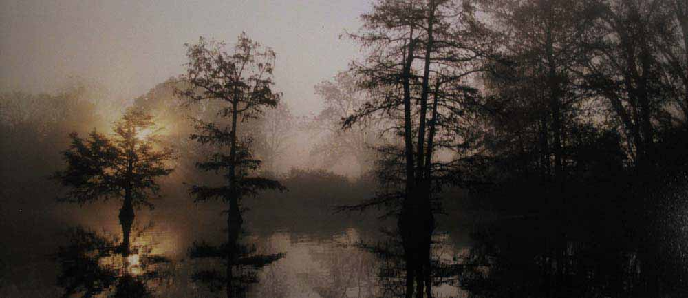 Sylvia Plachy. Morning Sun, Lake. Mississippi, Washington 2009<br/>
