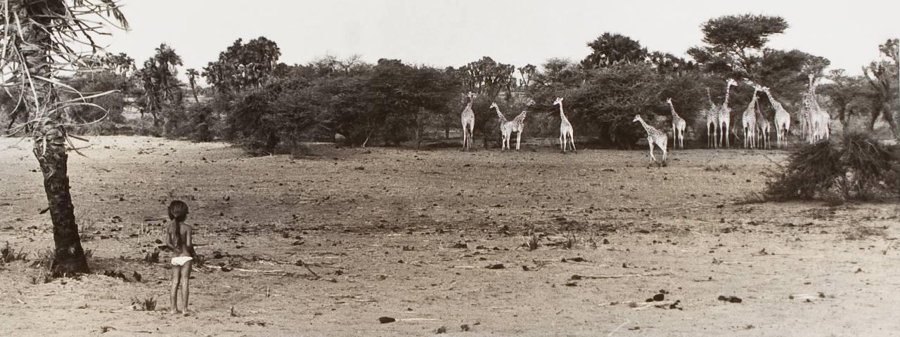Niger, girafes de Tilaberi, 1981. 40x50<br/>