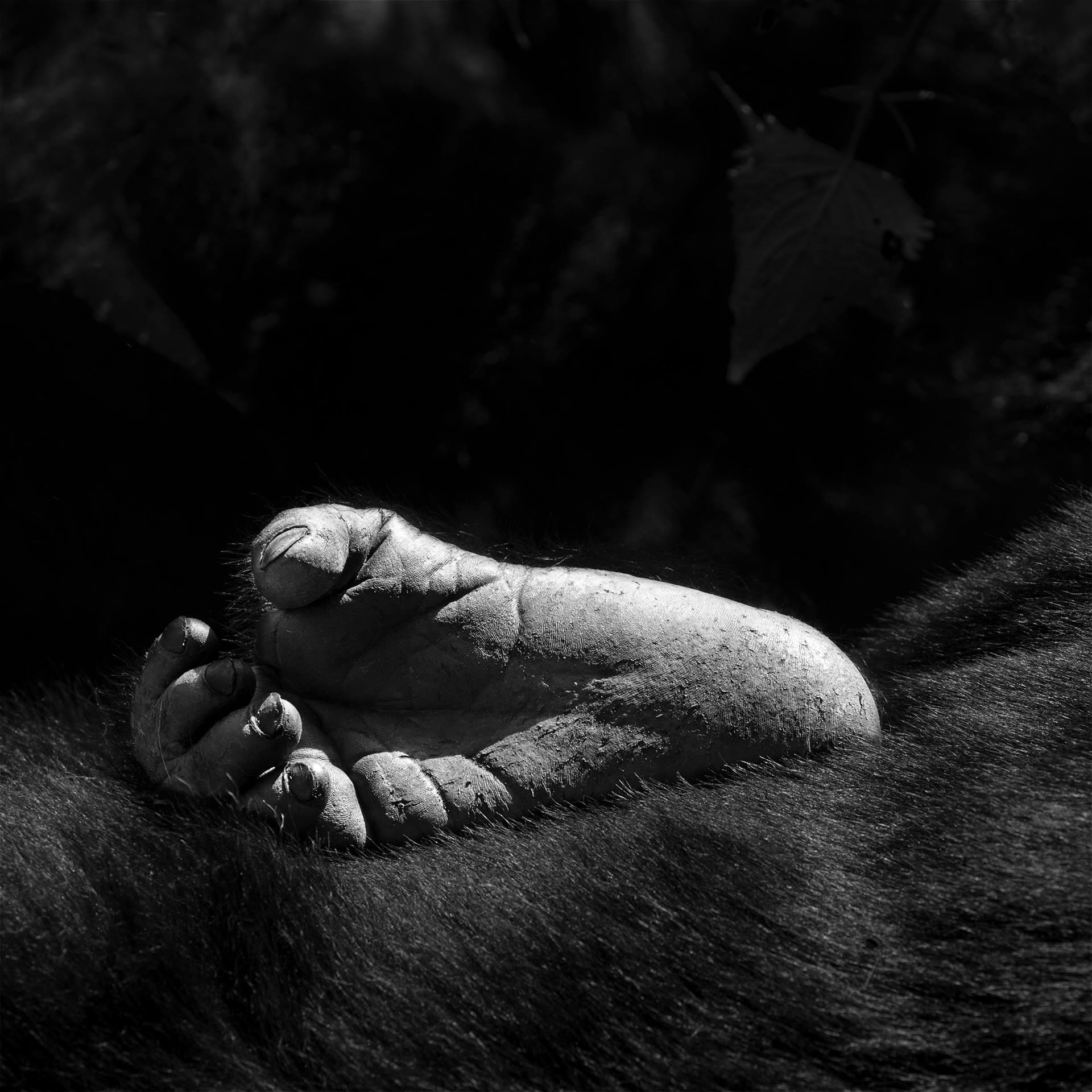 Serie primates. S/T, 2014<br/>