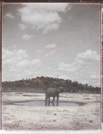 Plaine de Sawuti, Botswana, 2009<br/>