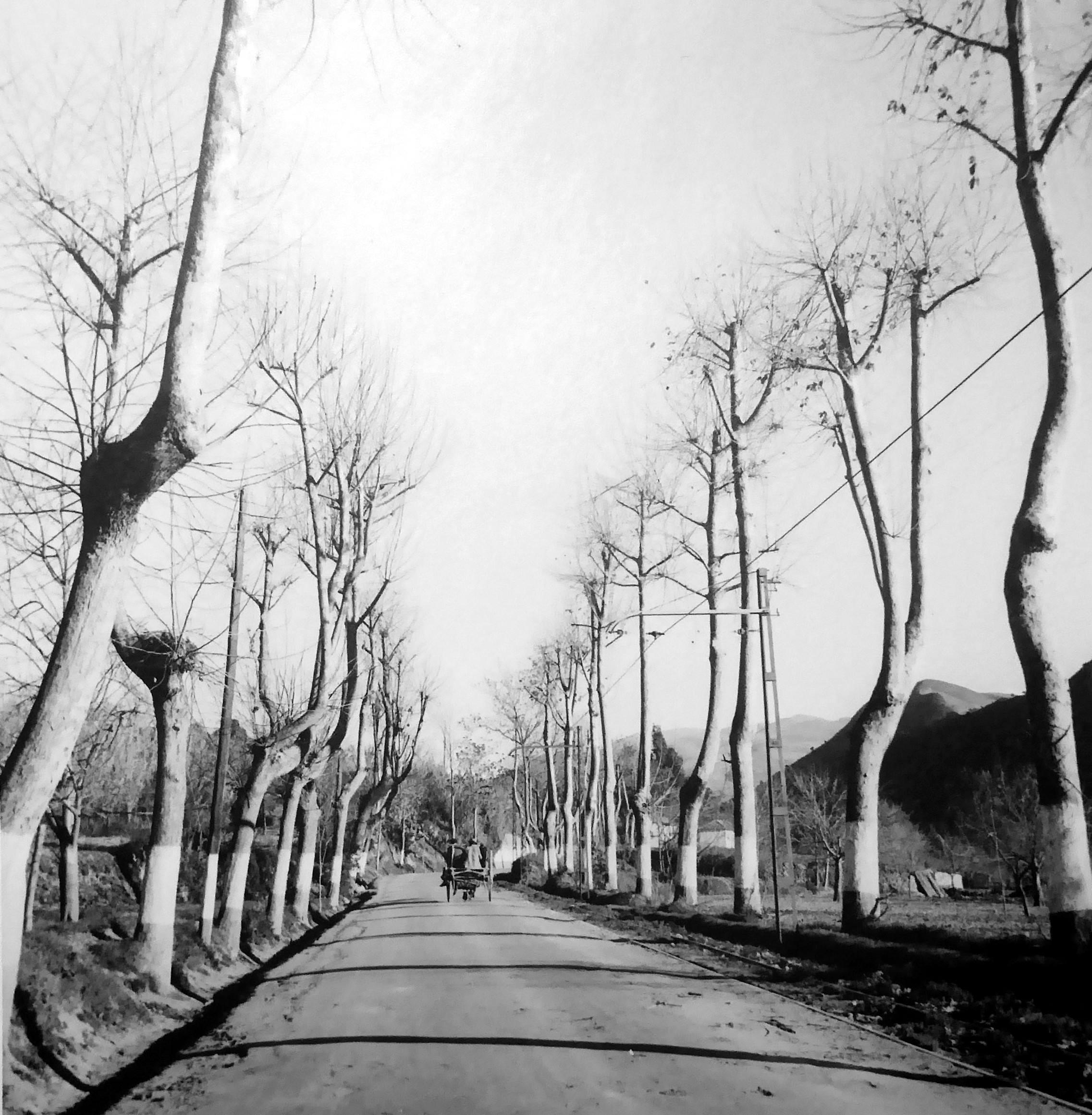 Bartolomé Ros Amador. Carretera de Sierra Nevada. Granada, 1950<br/>