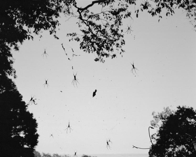 Tela de araña Lago Tanna, 2001<br/>Impresión de tintas de pigmentos / Inkjet print