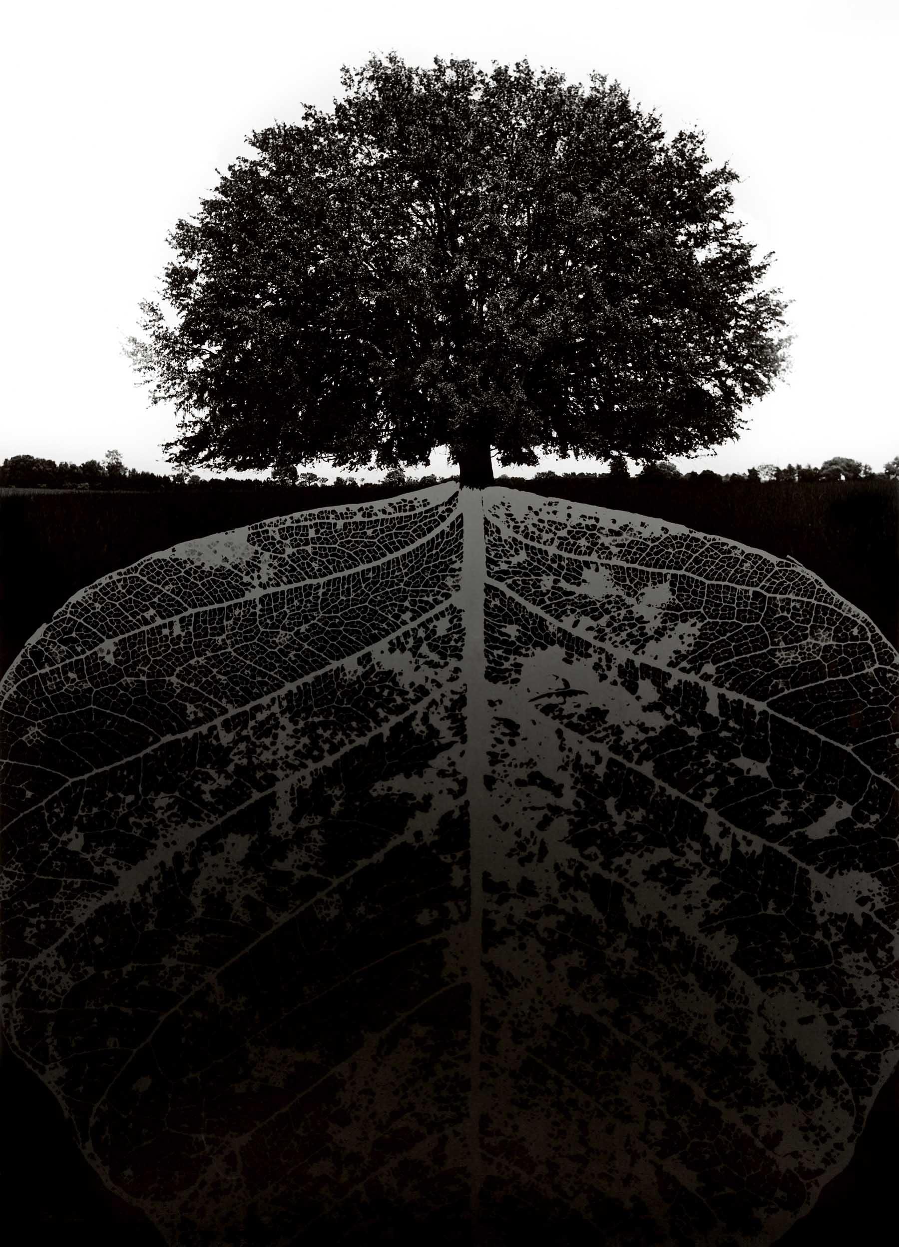 Jerry Uelsmann. Untitled,1964<br/>Gelatina de plata con tratamiento de archivo