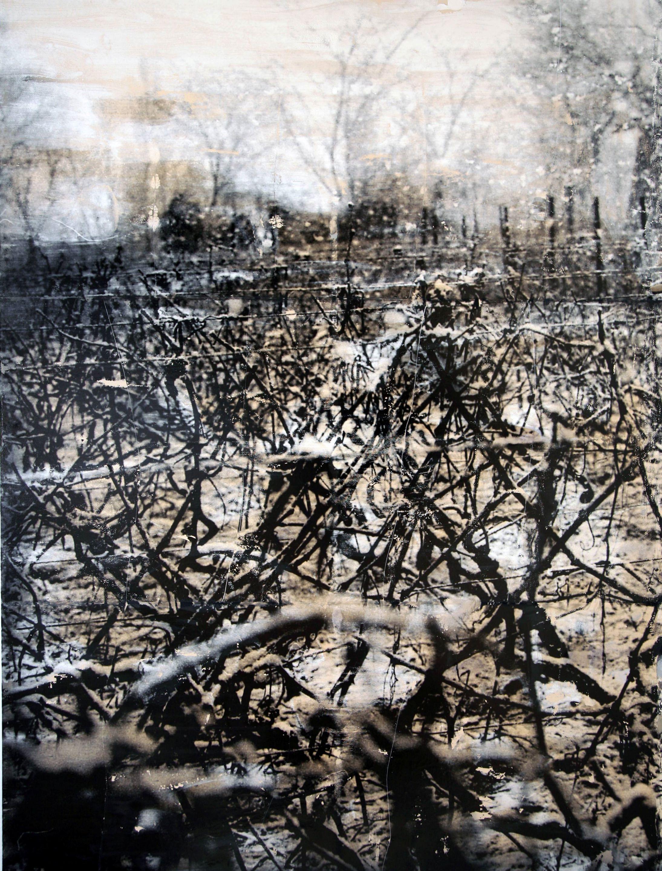 Viñas de invierno 1, 2006<br/>